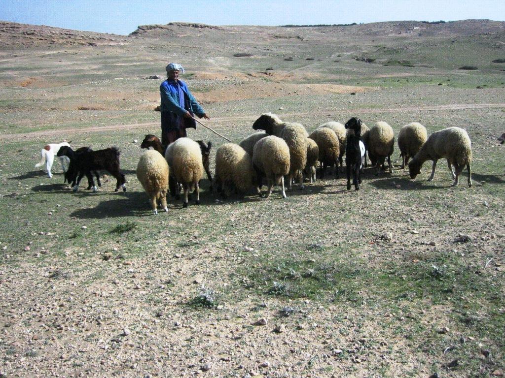 voyage de récompense ludico tunisie